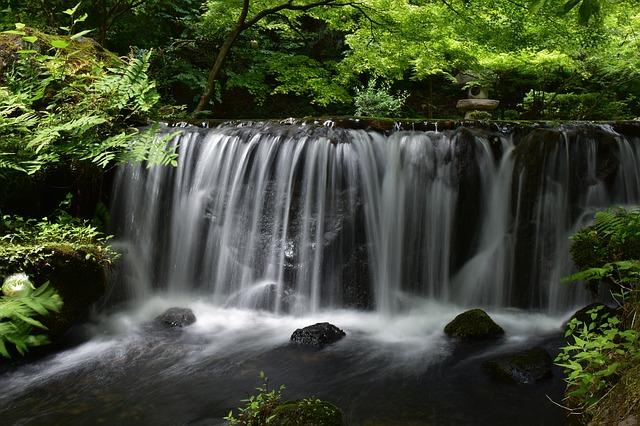 メンタルヘルスブログ:森林浴の効果